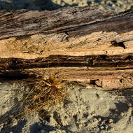 Sun lights the side of a piece of driftwood and a piece of tumbling weed.