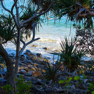Through the Pandanus Pines a surfer waits at Little Cove.