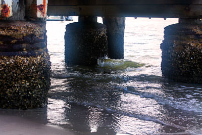 Thumbnail image of Under the jetty, barnacle encrusted pylons, along...