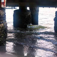 Under the jetty, barnacle encrusted pylons, along Noosa River.
