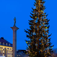 Christmas tree in the city square.