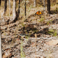 Colorful butterfly stands out against the dry and colorless background.