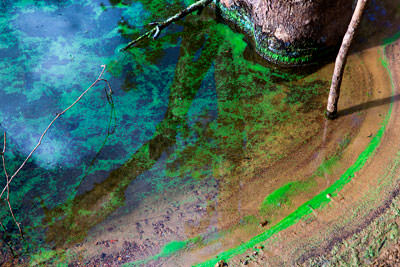 Thumbnail image ofClose up look at bright green algae on the water...