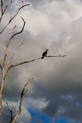 Thumbnail image ofBird perched on a dead tree branch against dark...