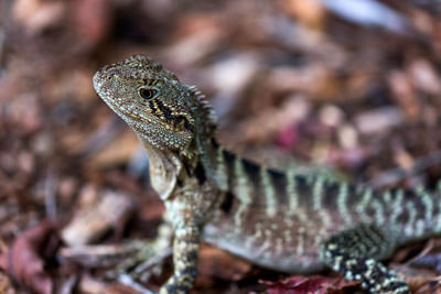Thumbnail image ofGetting in close for a good look at a water lizard.