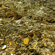 Broken coral make up the beach and shore line of the island and provide home to molluscs.