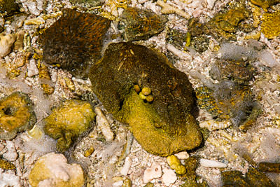 Thumbnail image ofMolluscs and algae on coral in a tide pool.