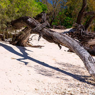 Fallen tree on the white coral beach and in the background the sign to the cross island walking trail.