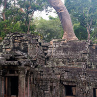 Substantial tree growing from the roof of the entrance tower of the southern gallery of enclosure III of Ta Prohm.