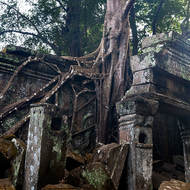 Gripping on, the roots of a tree taking over Ta Prohm.