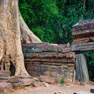 Very large tree growing straddling the outer wall of Ta Prohm near a gateway with a stone lintel.