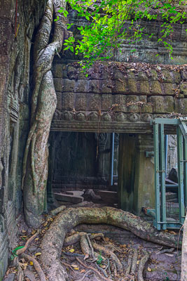 Thumbnail image ofA tree snakes its way up and over entrances and...