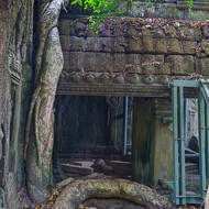A tree snakes its way up and over entrances and galleries at Ta Prohm.