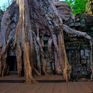 Seemingly surreal; a tree draped over a gallery at Ta Prohm.