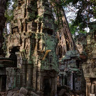 Towers and trees of the central sanctuary at Ta Prohm.