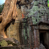 It is amazing to see this ancient structure still standing supporting huge trees.