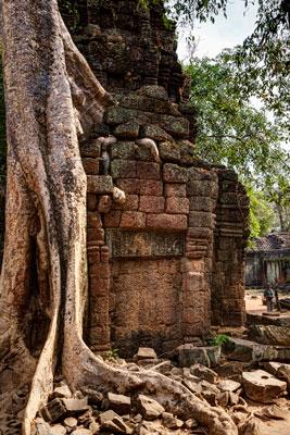 Thumbnail image ofTree roots snaking through ancient masonry of...