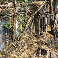 Jungle trees and creepers reclaim the galleries of Beng Mealea temple.