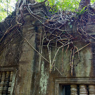 Rooftop trees with roots trailing down from gallery of Beng Mealea temple.