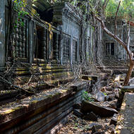 When the jungle reclaimed the Beng Mealea temple this area was dark and damp, only roots coming down seeking water prospered.