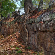 Tree growing atop the laterite wall around the Prasat Thom pyramid temple.