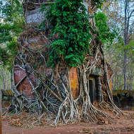 Brick tower shrine consumed by a tree at Prasat Chhin.