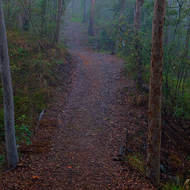 Misty morning in the forest, along the fire access trail.