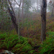 Ferny creek bed in the mist.
