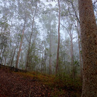 Up the slope of the fire access trail into the mist.