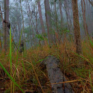 The normally dry, inhospitable forest, looks, in the mist, hospitable.