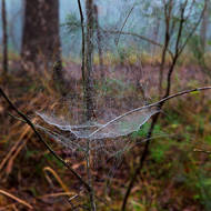 Morning mist delineates the spider web.