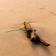Driftwood stranded after the tide has receded.