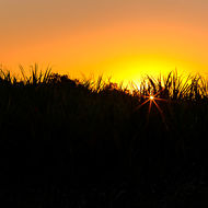 Sunset through the sugarcane.