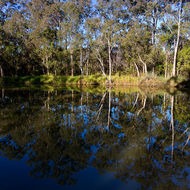 Winter afternoon reflections on the Scrubby Creek billabong.