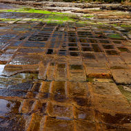 Paving tile-like formation of the Tessellated Pavement.