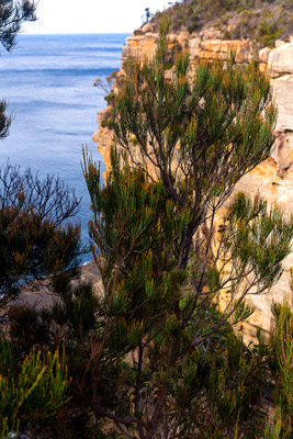 Thumbnail image ofTrees hanging on to the edge of the Devils Kitchen...