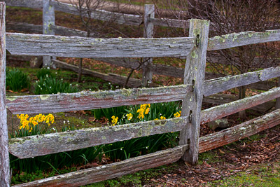 Thumbnail image ofSplit timber fence and garden at the rear of the...