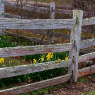 Split timber fence and garden at the rear of the Commandant's house at the Port Arthur convict prison.