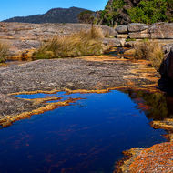 Rocks, tidal pools and grasses at Bicheno.