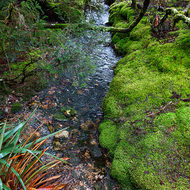 Small creek lined by a mossy bank.