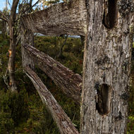 Old split log fence.
