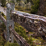 Lichen covered and rotting away, old split log fence.