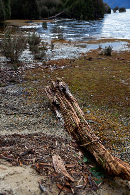 Thumbnail image ofDriftwood on the shore of Lake St Clair.