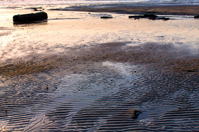Thumbnail image ofSand ripples and driftwood.
