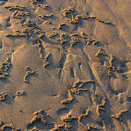 Footprint in the sand, decorated by crabs' diggings.