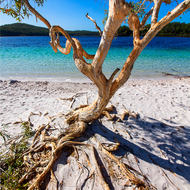 Imagine tropical south pacific idyll, reality perched dune Lake McKenzie.