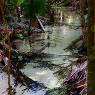 Clear waters of Wanggoolba Creek in the dappled rainforest light.