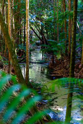 Thumbnail image ofPeaceful Wanggoolba Creek scene.