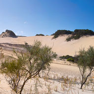 Panorama of the Fraser Island Kirrar Sandblow.