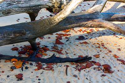 Thumbnail image ofDriftwood and sand/organic material concretions.